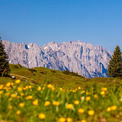 Eggenalm mit Wilder Kaiser im Frühling, Kaisergebirge, Tirol, Österreich